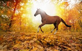 free fall wallpaper for computer fall desktop wallpaper with horses