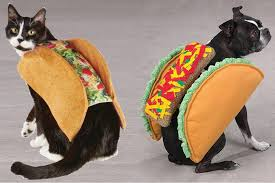 Taco Costume Taco Costume For Cat Archives Riot Fest
