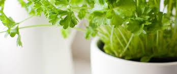 herbs indoors the 9 easiest herbs to grow indoors more com
