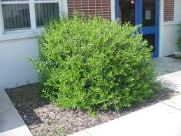 garden bushes types home outdoor decoration