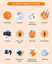 cat skin conditions u0026 natural remedies canna pet