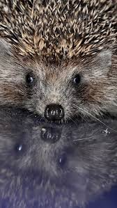 471 best animals images on pinterest animals animal kingdom and