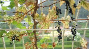 100 growing fruit trees in ireland 116 best celtic irish