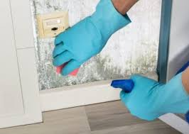 Home Tricks Black Mold Removal Best Tips And Home Remedies Video