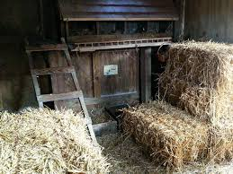 bedding for chickens safe and easy winter coop heat and