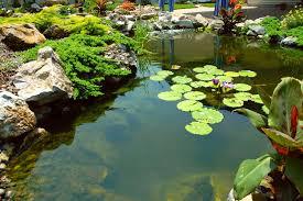 Patio Pond by Koi Ponds