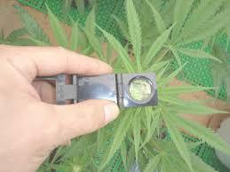 good quality garden pests identification vectorsecurity me