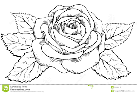 design flower rose drawing design flower rose drawing clipartxtras