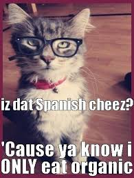 Hipster Cat Meme - elegant 71 best hamilton the hipster cat images on pinterest