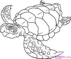 sea turtle drawing pictures draw turtle step step