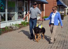 guide dog harness progressive animal wellness u0027 fun fundraiser for fidelco raised