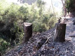 update unsuitable tree removals on creekside trail glen