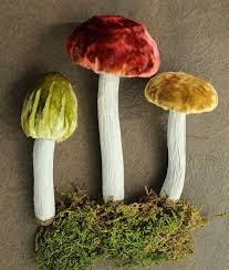 265 best mushrooms moss toadstools images on