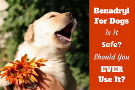 benadryl for dogs can you give it is it safe what dosage
