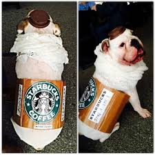 Halloween Costumes English Bulldogs 27 Cutest Pet Halloween Costumes