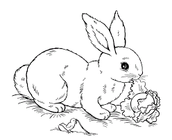 Free Printable Easter Bunny Coloring Pages For Kids Rabbit Colouring Page