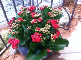 bureau de poste besan輟n bureau de poste besan輟n 36 images plantes grasses fleuries