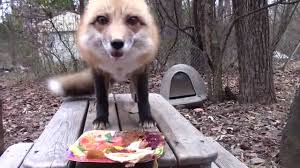 funny animal thanksgiving pictures happy thanksgiving ronron youtube