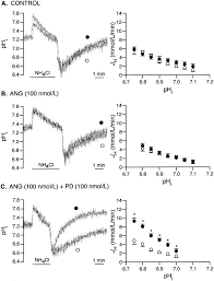 regulation of sarcolemmal na h exchanger activity by angiotensin