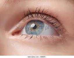 Light Brown Contact Lenses Light Blue Contact Lenses Stock Photos U0026 Light Blue Contact Lenses