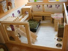 How To Build An Indoor Rabbit Hutch Best 25 The House Bunny Ideas On Pinterest Rabbit Ideas Cages