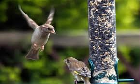 homemade bird feeders wilderness awareness