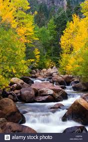 west fork carson river alive fall color