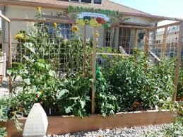collection growing vegetables in a small space photos free home