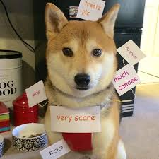 Meme Halloween - sihba inu doge costume halloween know your meme