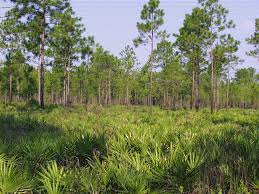 Florida Vegetaion images Florida forest gif