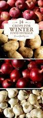 Winter Root Vegetables List - 14 crops for winter food storage
