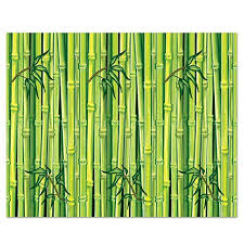 Jungle Backdrop Jungle Backdrop Amazon Com