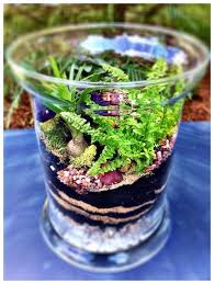 how to make a terrarium tabletop garden snapguide