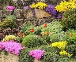 Best Plants For Rock Gardens Rock Garden Plant Botanic Garden Crevice Rock Garden Best Plants