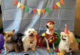 dog birthday party daydreamer creator diy extraordinaire dog birthday party
