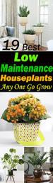 19 best low maintenance houseplants balcony garden web