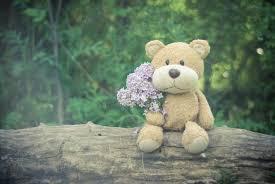 free stock photos of teddy bear pexels