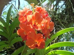 garden landscape plants victicase u0027s blog victicase u0027s blog
