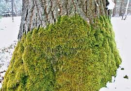 free images snow winter white leaf flower trunk moss