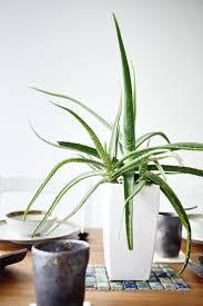 benefits of houseplants why you need more houseplants