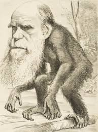 darwin as an ape the weekly show