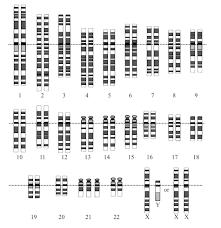 ib biology notes 4 2 meiosis