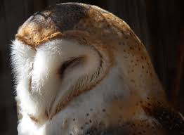 Barn Owl Sounds 6 Animals That Mate For Life The National Wildlife Federation Blog
