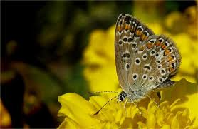 my small butterfly photo image animals wildlife insects images