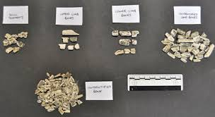 human cremation archaeologists find britain s oldest human cremation at mesolithic
