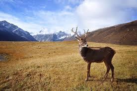 researchers sequence reindeer genome genetics sci news com