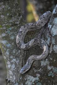 Backyard Reptiles 137 Best Reptiles Images On Pinterest Reptiles Cgi And Snake