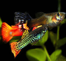 aquarium pvt ltd about