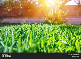 beautiful view on cute backyard image u0026 photo bigstock