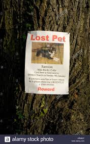 lost pet poster of a dog attached to tree stock photo royalty